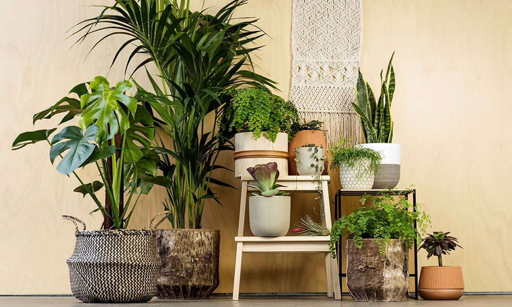 How To Use Indoor Plants To Increase The Aesthetics Of The