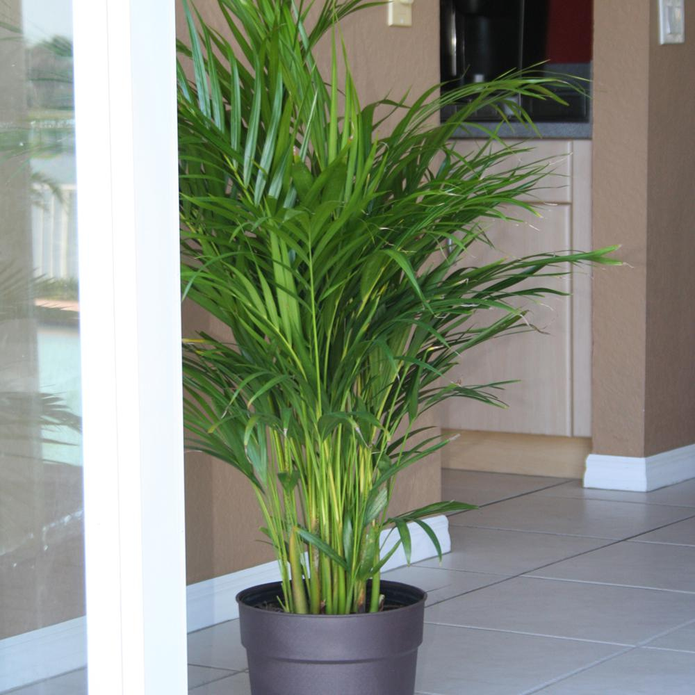 Nursery Indoor Plants Near Me: How To Use Indoor Plants To Increase The Aesthetics Of The